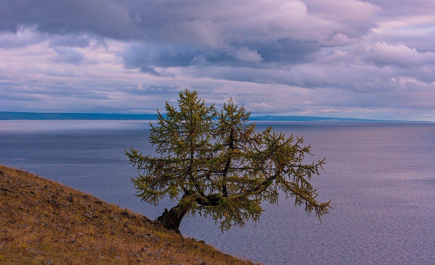 озеро хубсугул монголия вечер закат  осень облака дерево одинокое лиственница, Мальцев Юрий