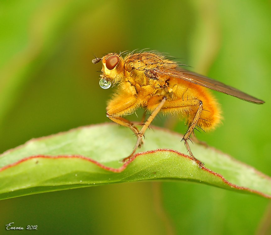 муха, природа, макро, етти