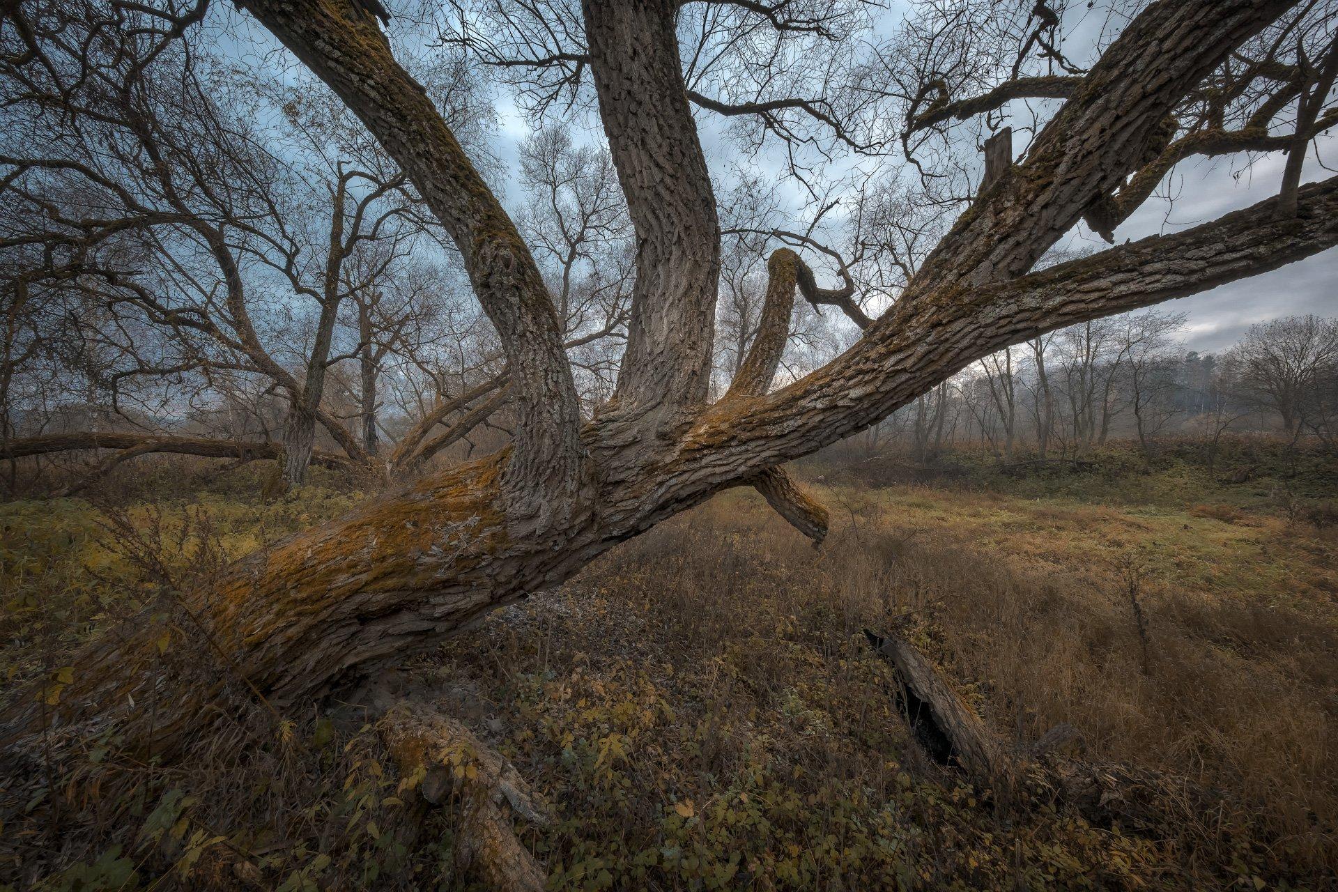 истра, река, деревья, старые, осень, октябрь, туман, холод, Андрей Чиж