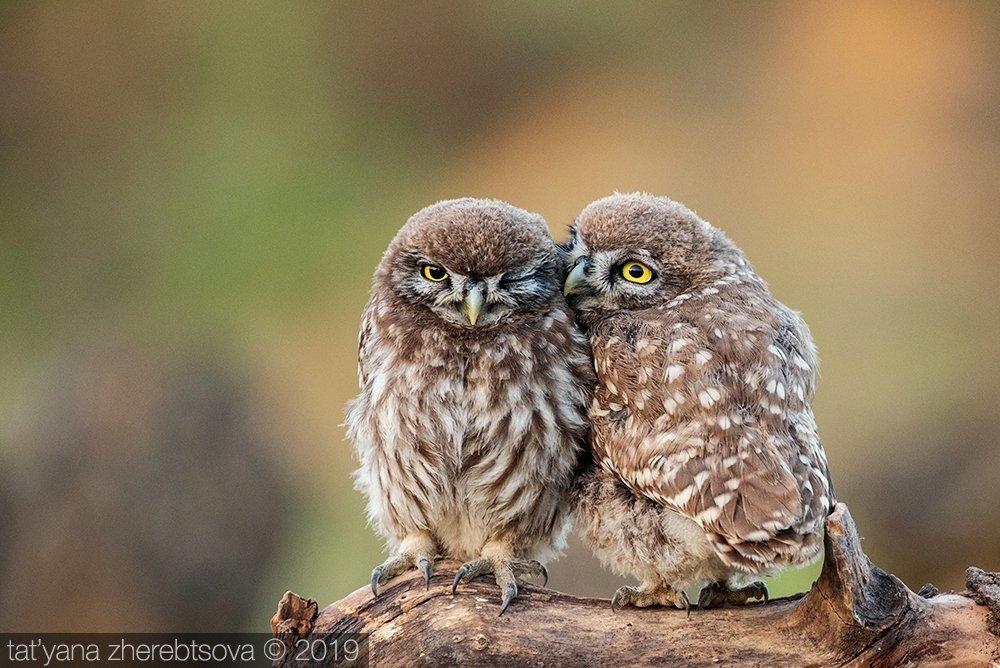 my-mriya, owl, Татьяна Жеребцова