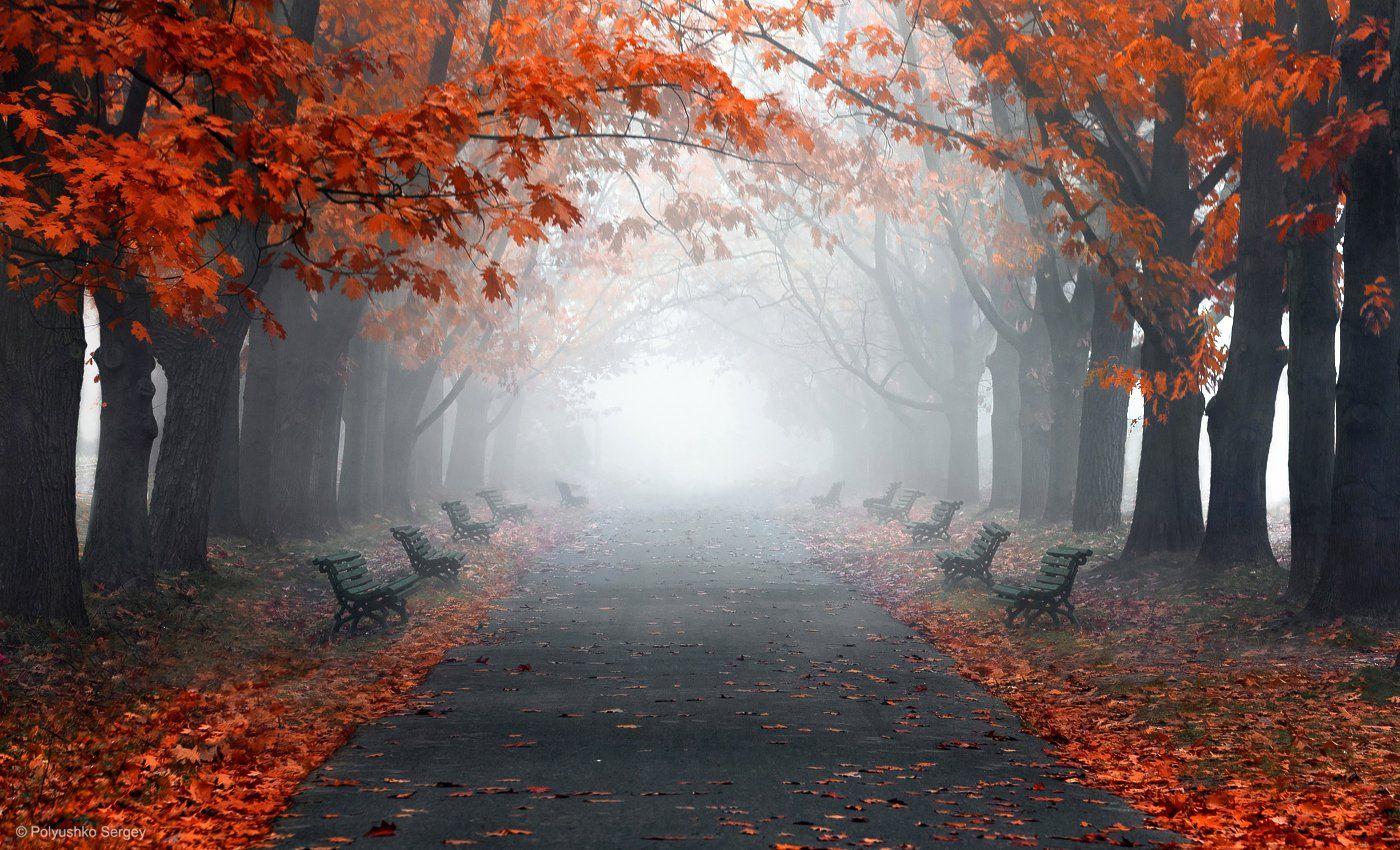 осень, туман, киев, украина, Полюшко Сергей