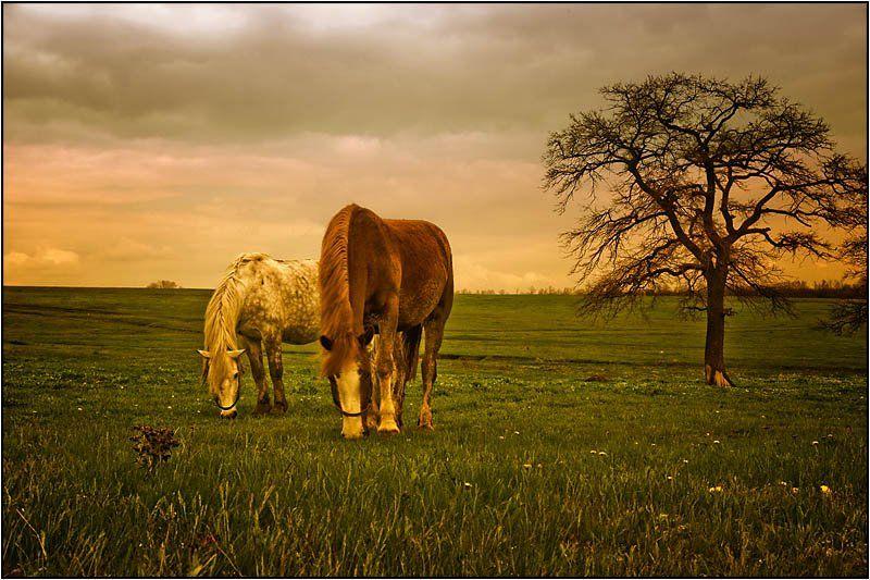 кони , лошади, Yuri Mart