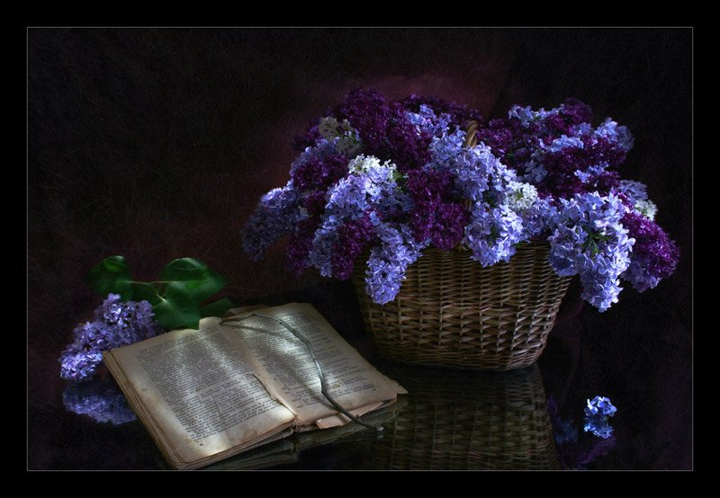 сирень, книга, ночь, световая кисть, Айрин