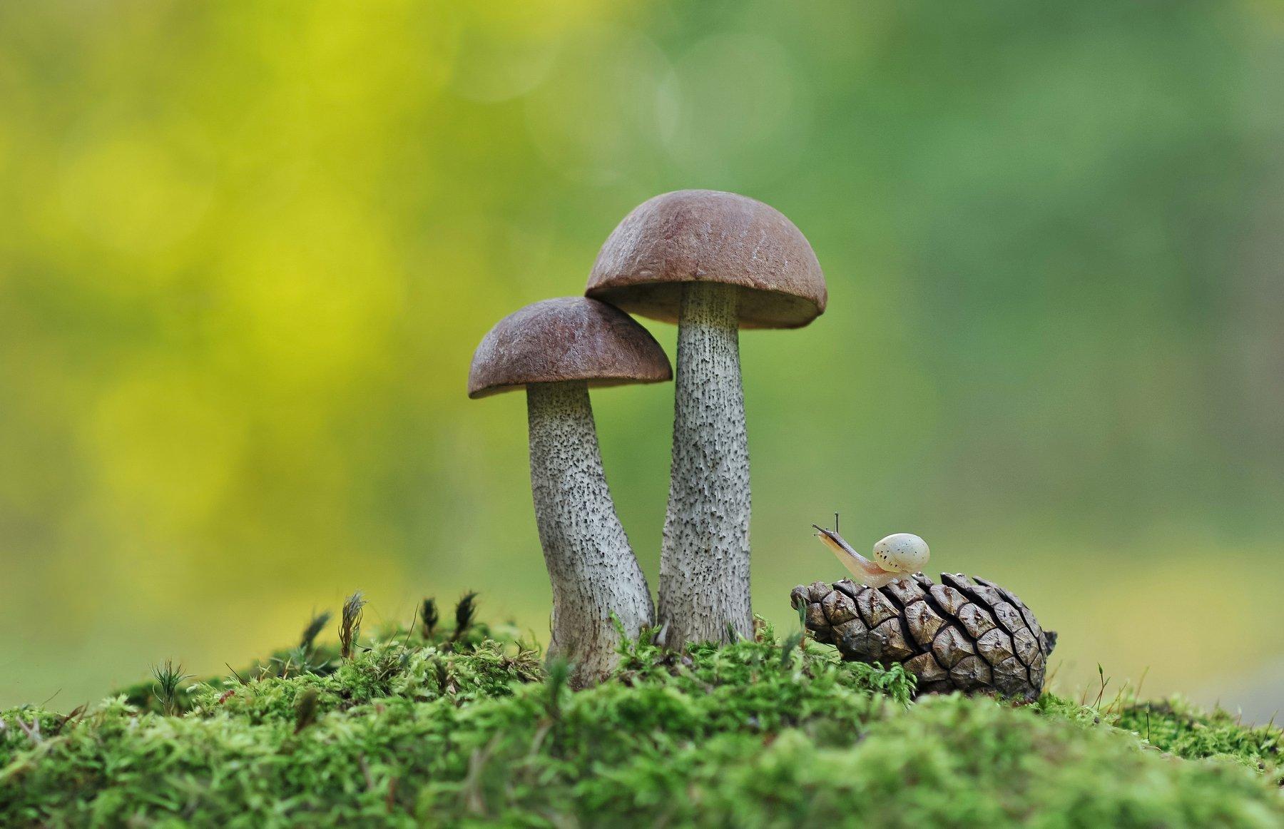 грибы, улитка, природа, Александр Гвоздь