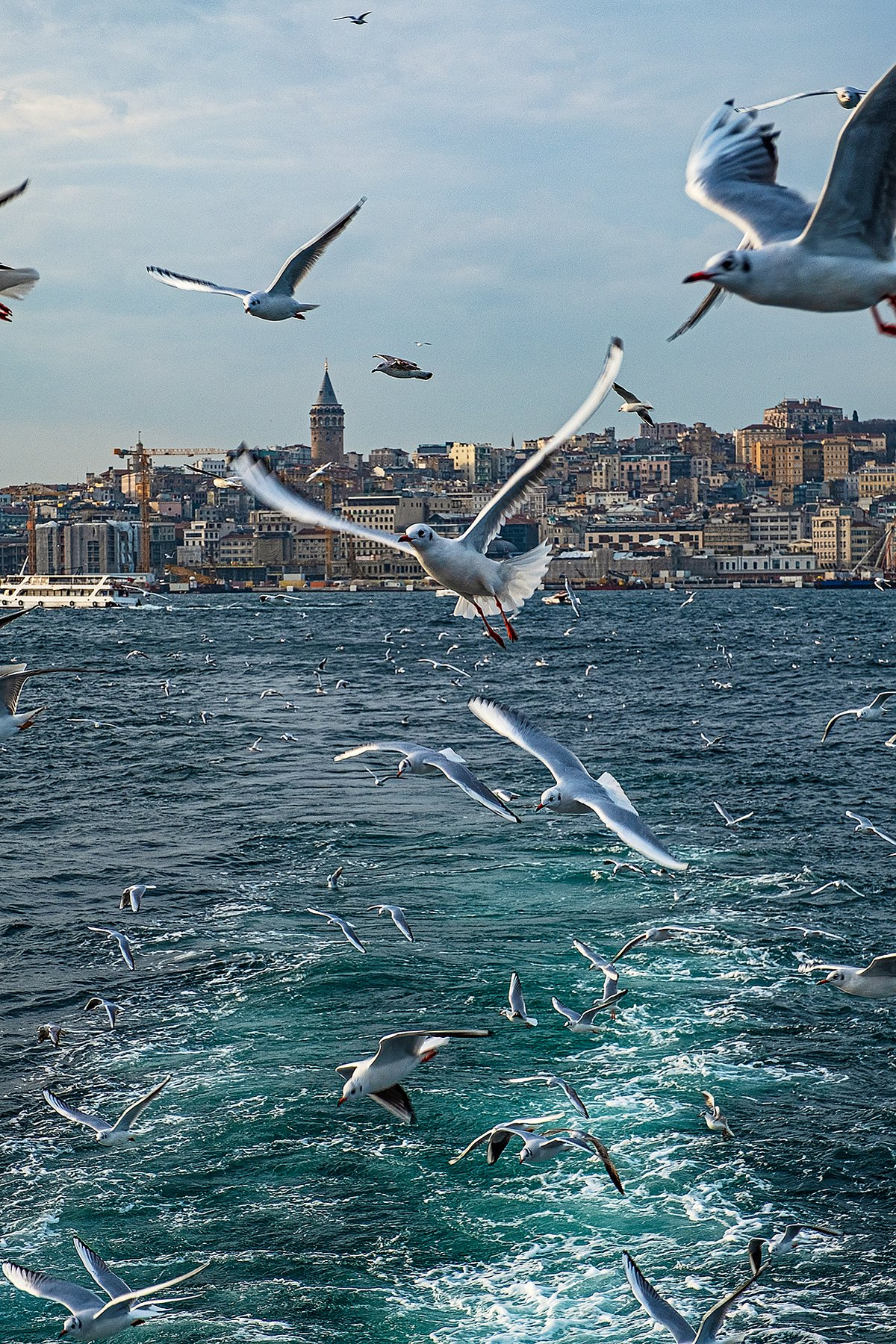 istanbul, bosphorus, seagull, turkey, стамбул, босфор, турция, чайка, Владимир В. Эделев