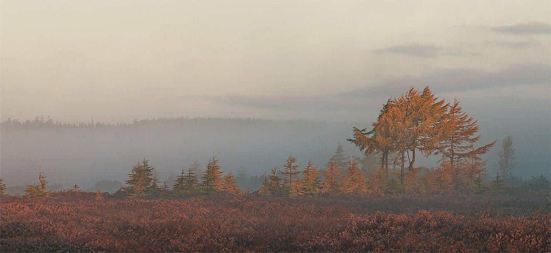 туман, утро, Руслан Бабин