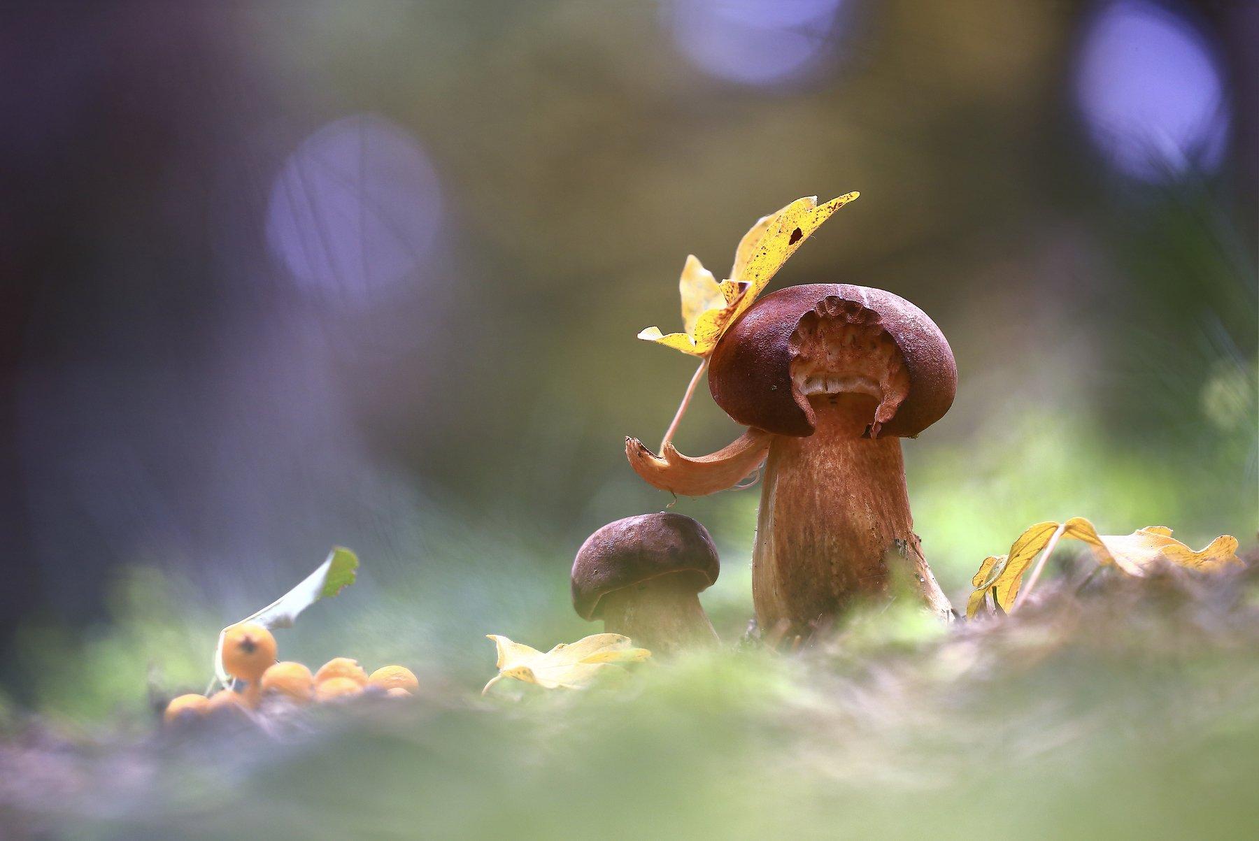 Гриб.лес.осень.лист., Viktor Schneider