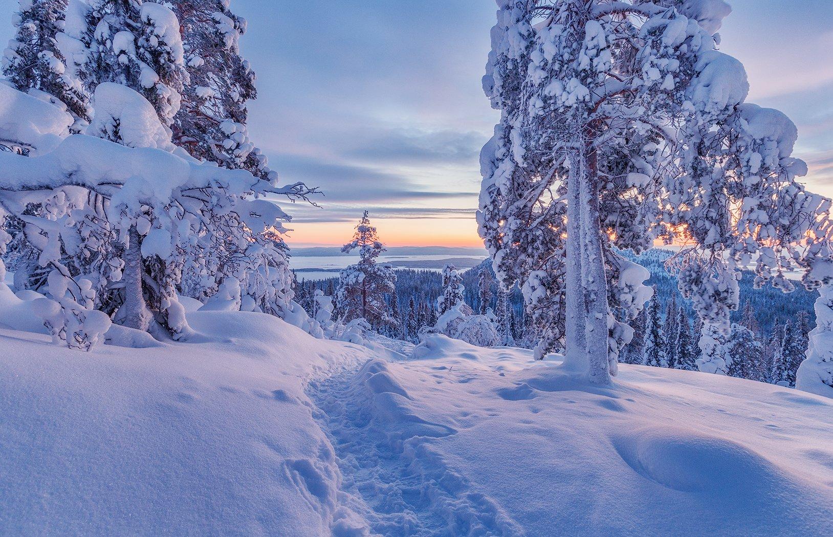 снег, горы, ели, кандалакша, закат, Липецких Владимир