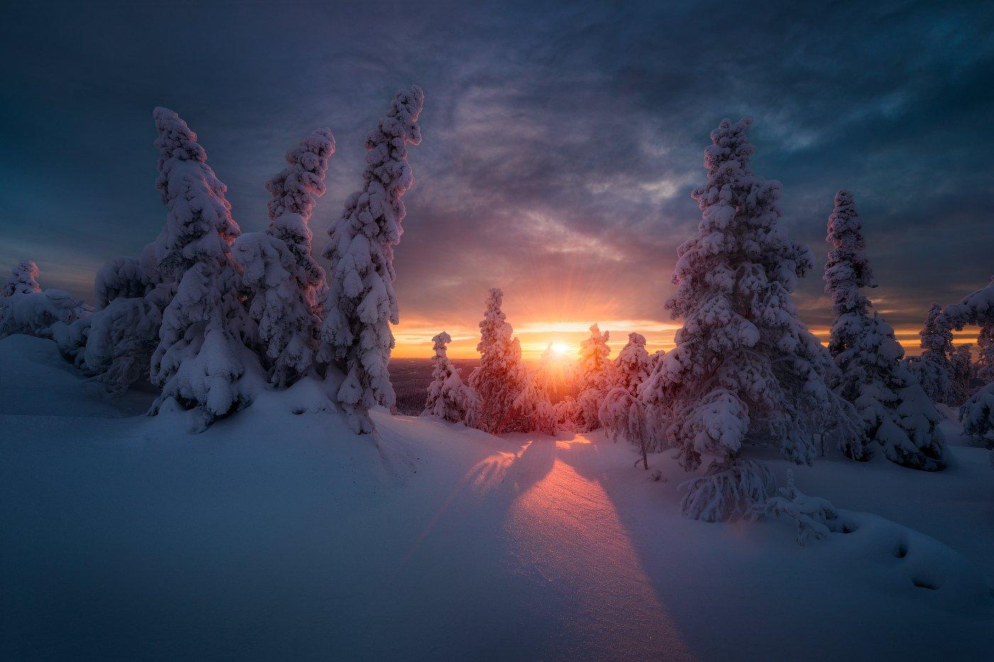 зима, снег, закат, ёлки, Cтанислав Малых