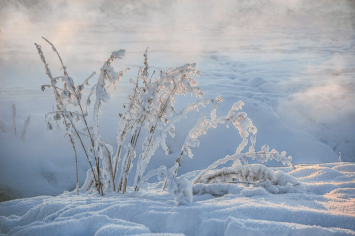 травинки, снег, Москальчук Татьяна
