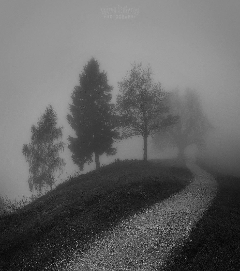 mist, fog, туман, дерево, Сенкевич Андрей