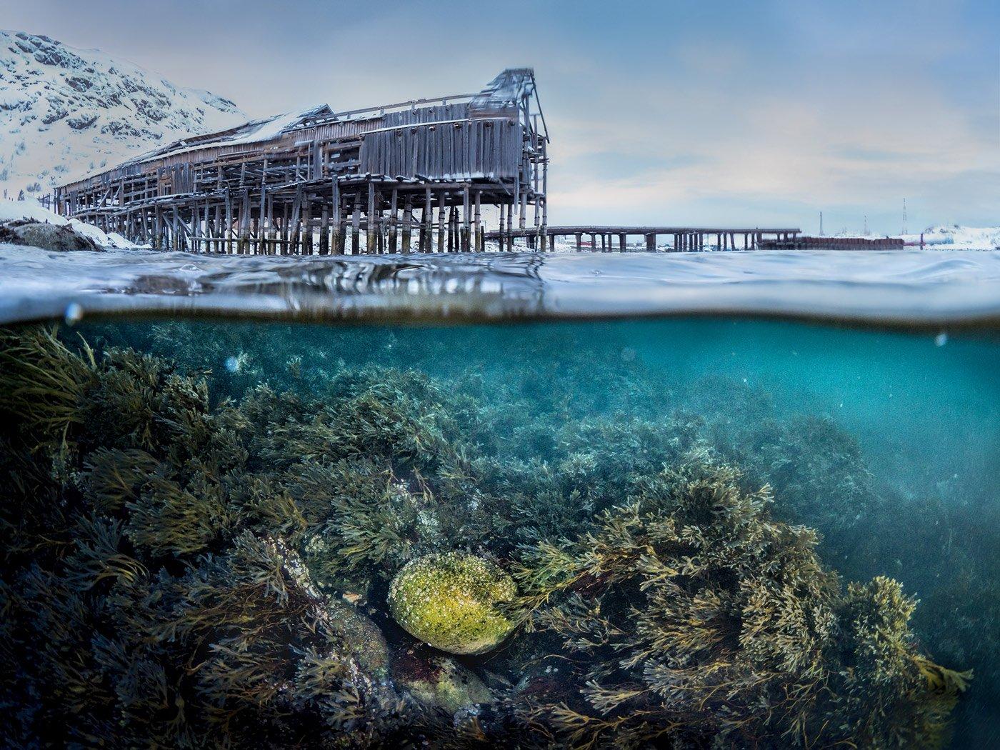 зима,север,териберка,подводный,сплит,под водой,природа,фототур,россия,пейзаж, Elena Pakhalyuk