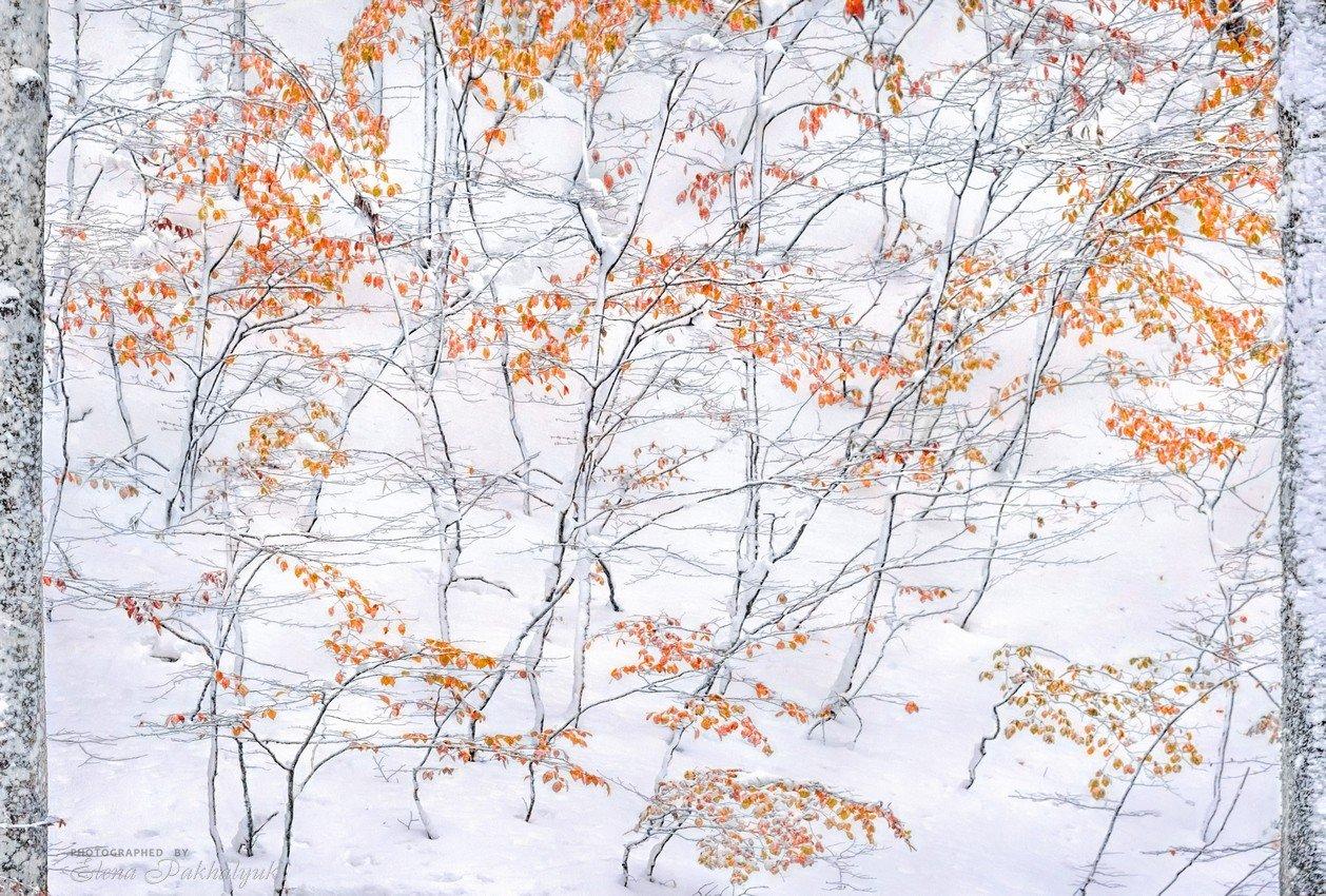 зима,осень,снег,пейзаж,крым,айпетри,природа,фототур, Elena Pakhalyuk