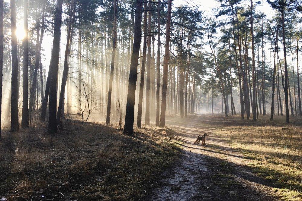 природа, лес, утро, пейзаж, рассвет, Piligrim