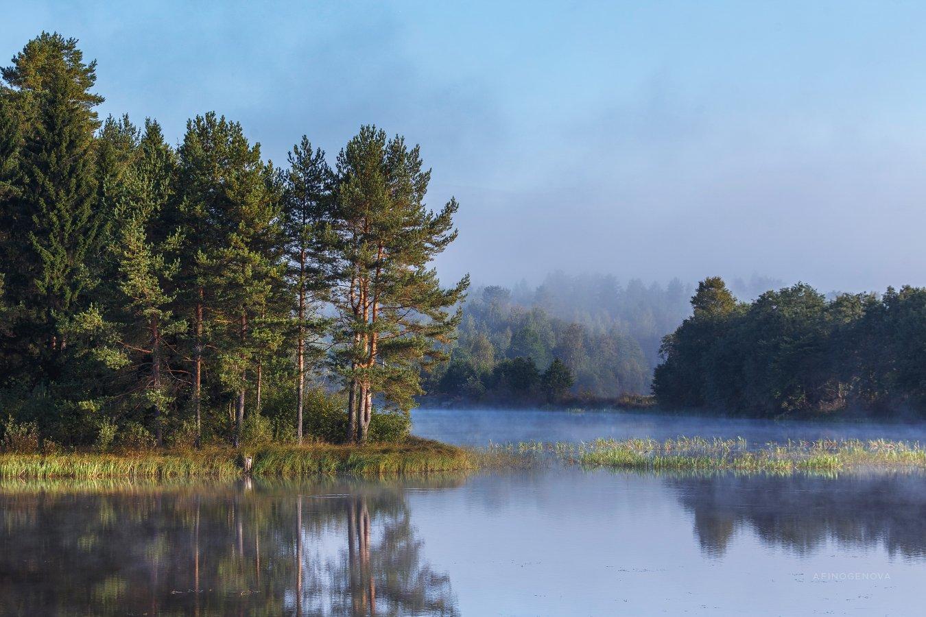 утро туман лес берег отражение, Афиногенова Татьяна