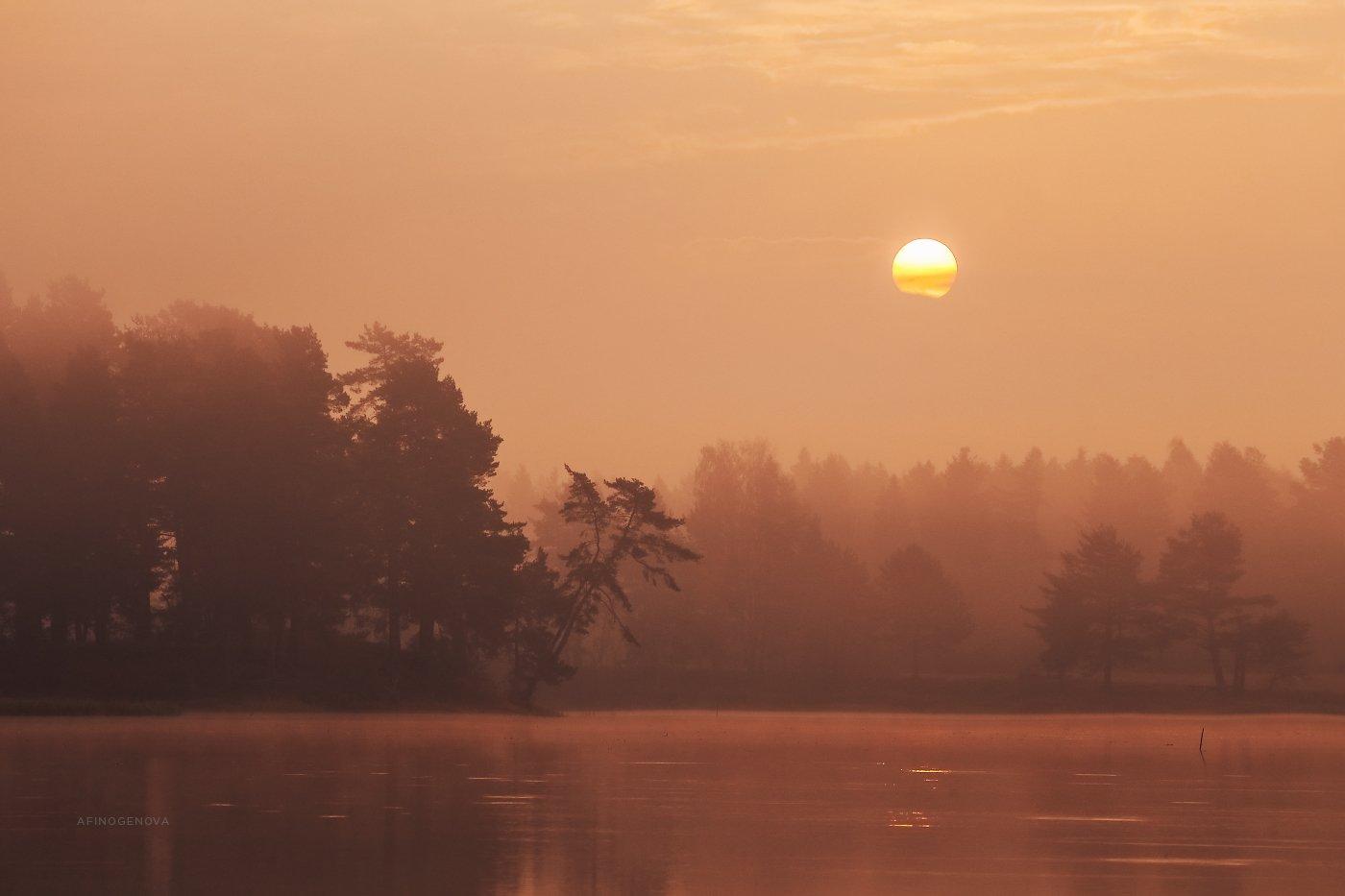 утро солнце рассвет лес, Афиногенова Татьяна