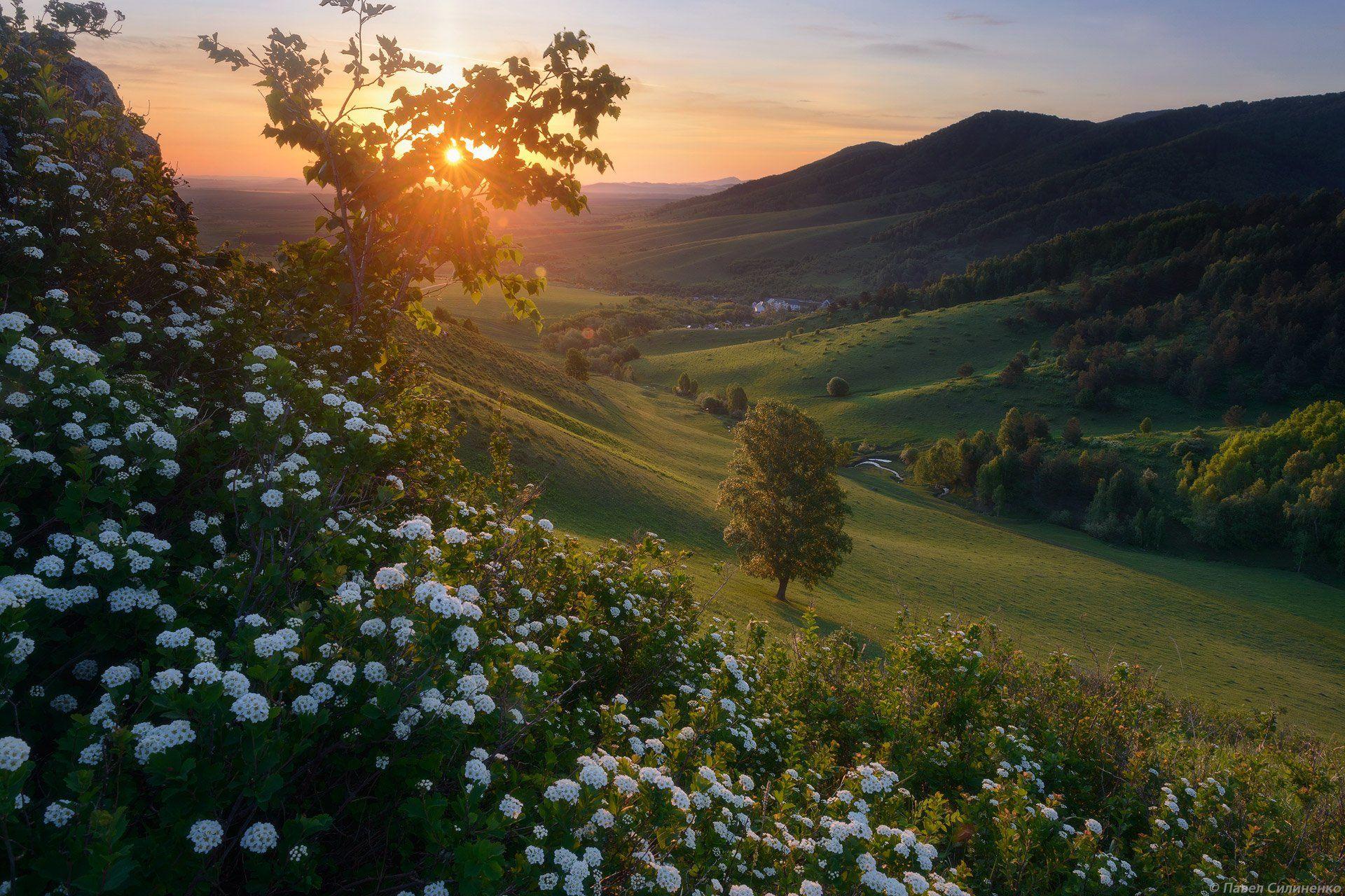 алтай, пейзаж, рассвет, солнце, восход, цветы, горы, свет, лес, Павел Силиненко