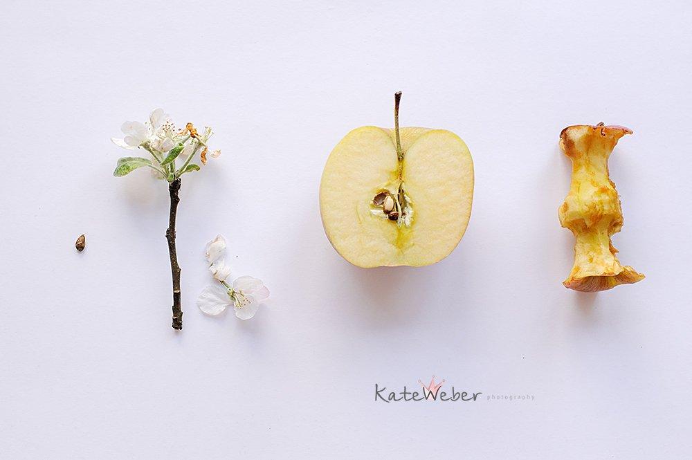 apple, seed, blossom, fruit, Ekaterina Weber