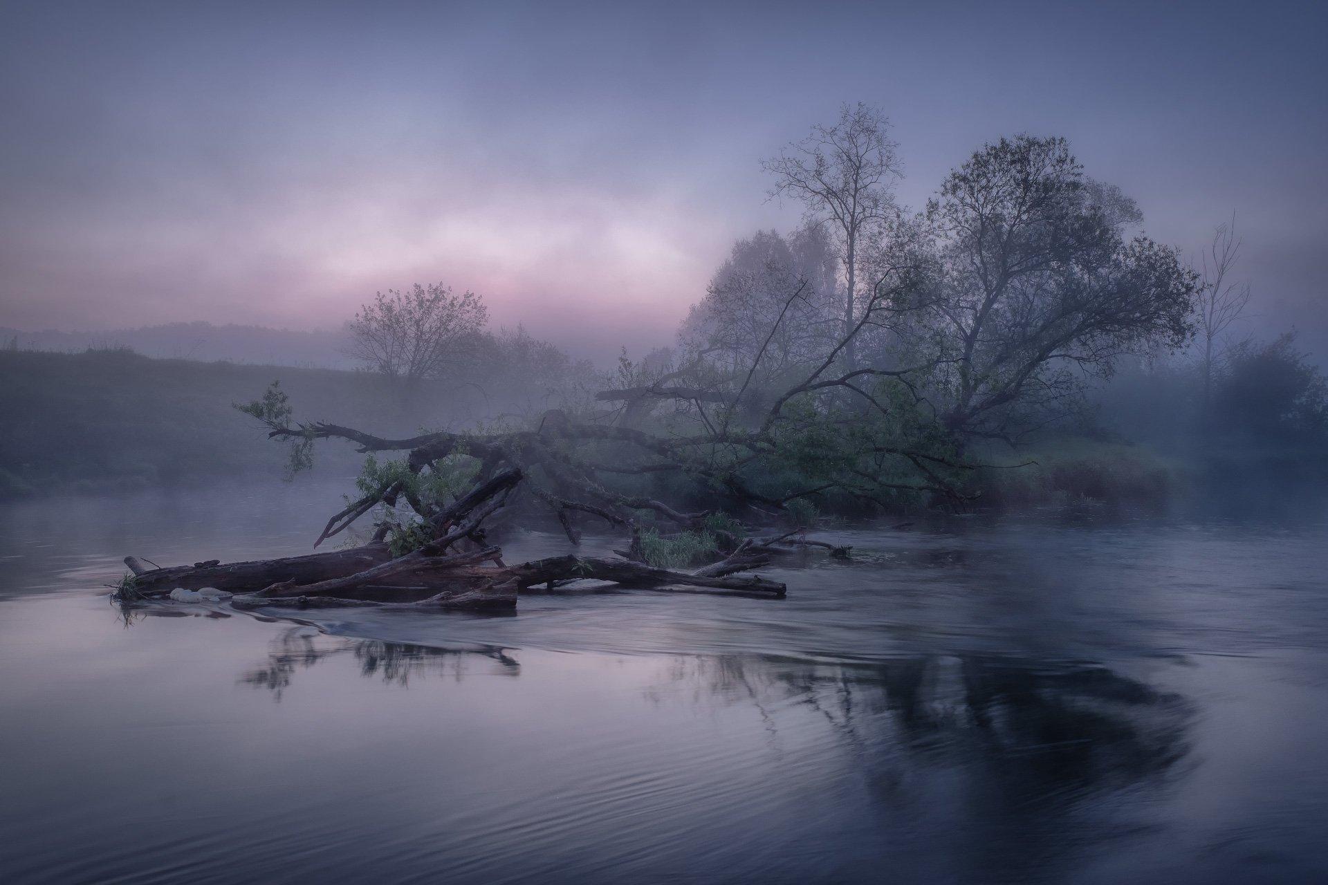 истра, река, утро, рассвет, бурелом, туман, заря, Андрей Чиж