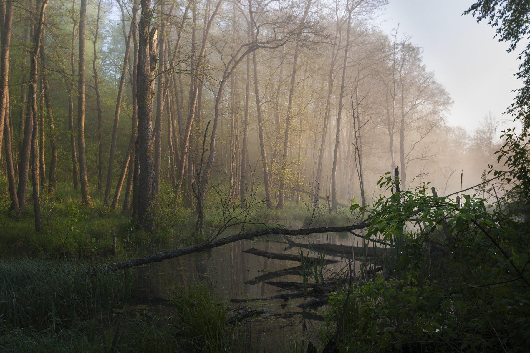 туман, московская область, утро, природа, пейзаж, Кыров Александр