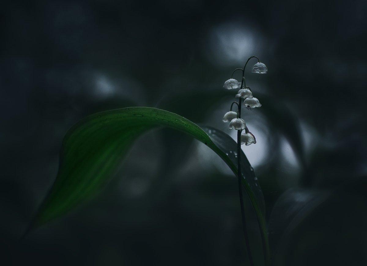лес, свет, ландыш, природа, Баранов Олег
