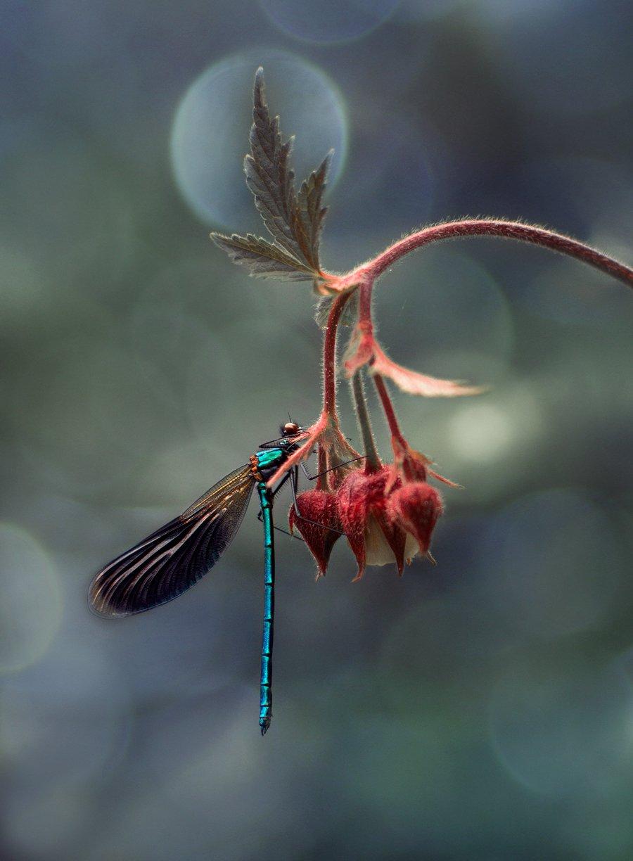 лес, свет, природа, стрекоза, Баранов Олег