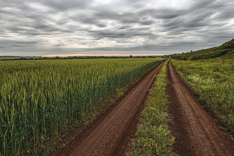 просёлок, просёлочная дорога, дорога, пейзаж, природа, поле, пшеница, облака, Диденко Юрий