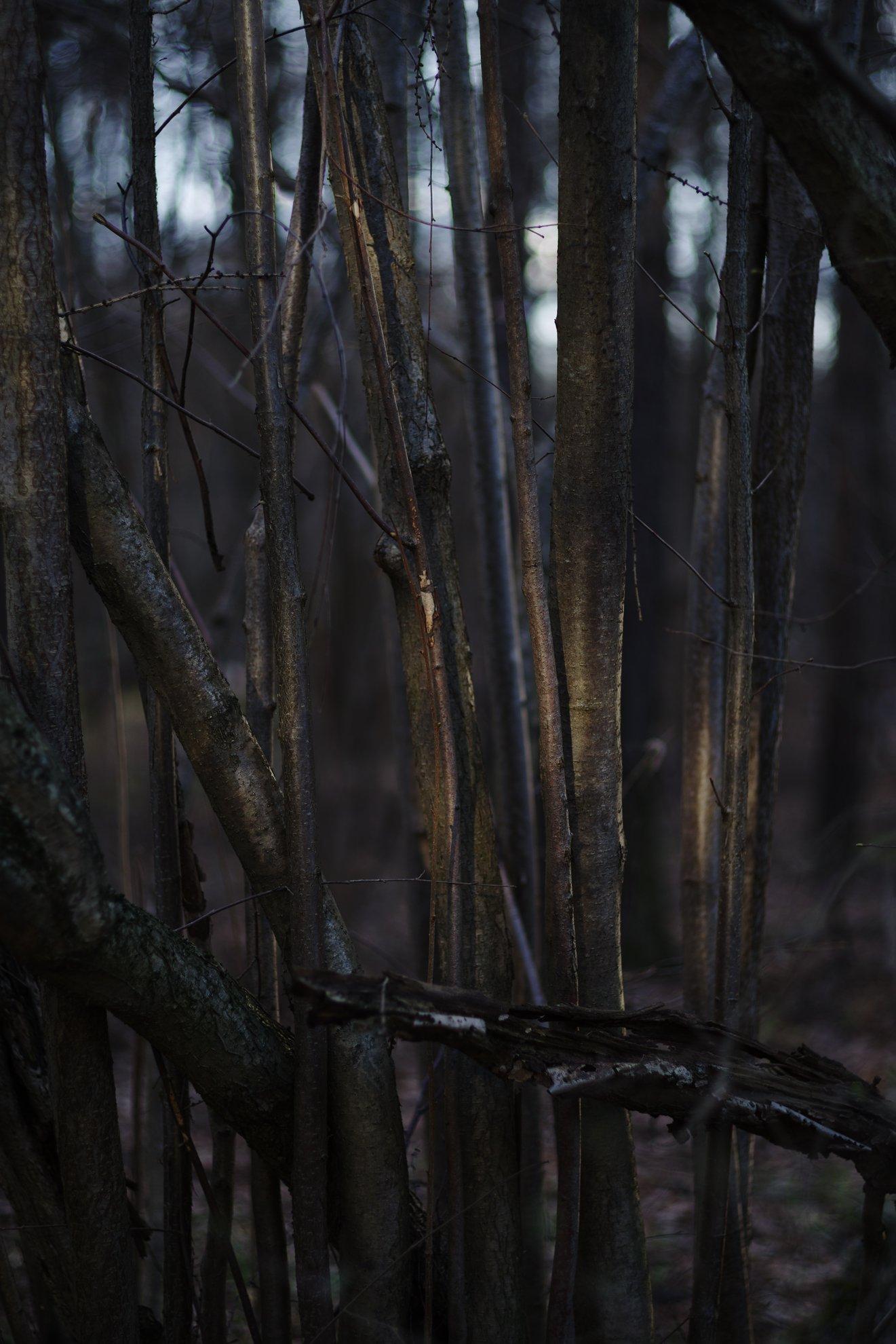 деревья, Егоров Алексей