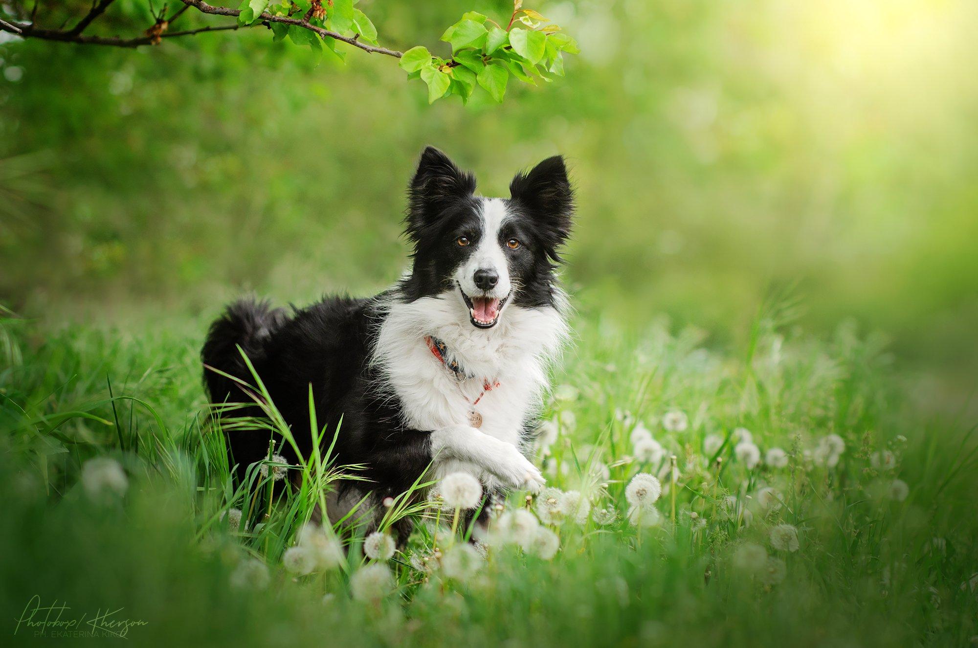 собака, анималистика, природа, весна, портрет, Кикоть Екатерина