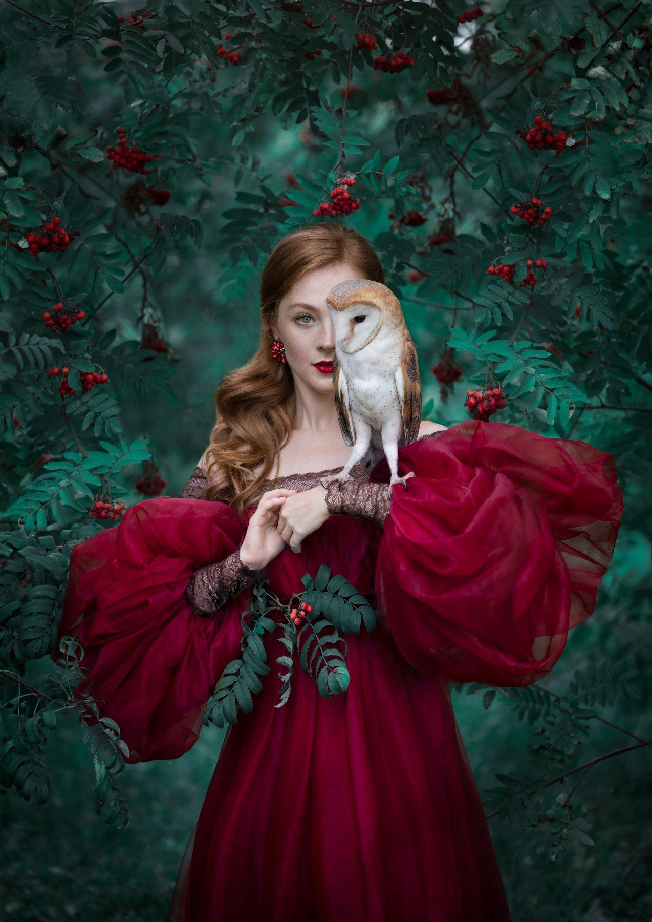 артфото, фотографмосква, рябина, художественнаяфотография, сова, сипуха, съемкасживотными, Fedorova Evgeniya
