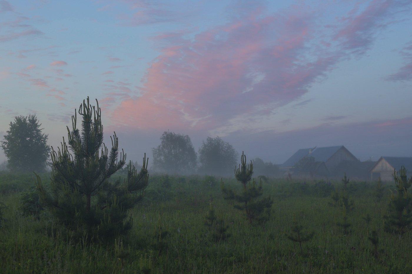 утро туман деревня поле сосенки, Дмитрий Алексеев