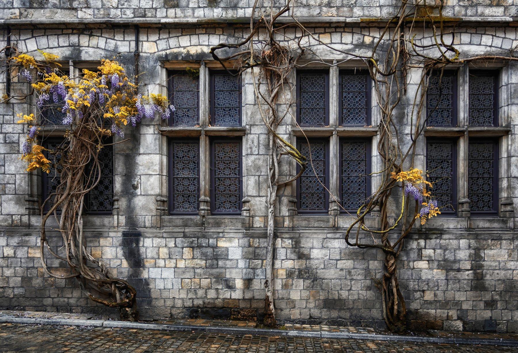 окна, дерево, Alexandr Bezmolitvenny