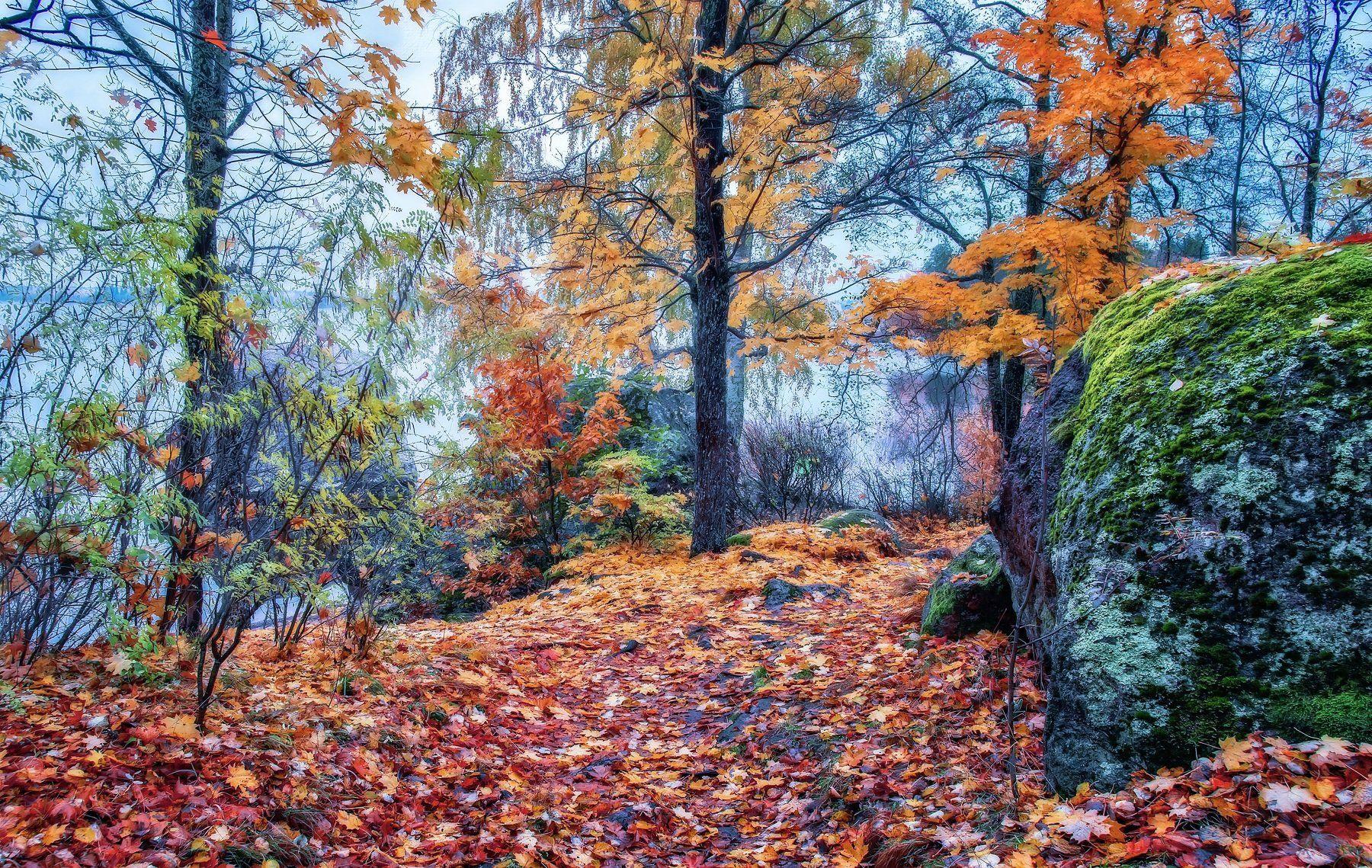 пейзаж,осень,парк,камни.листья.туман, Тамара