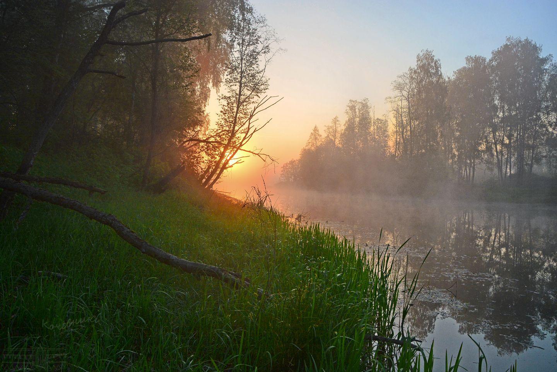 пейзаж, туман, рассвет, деревня, пруд, озеро, Абрамова Юлия