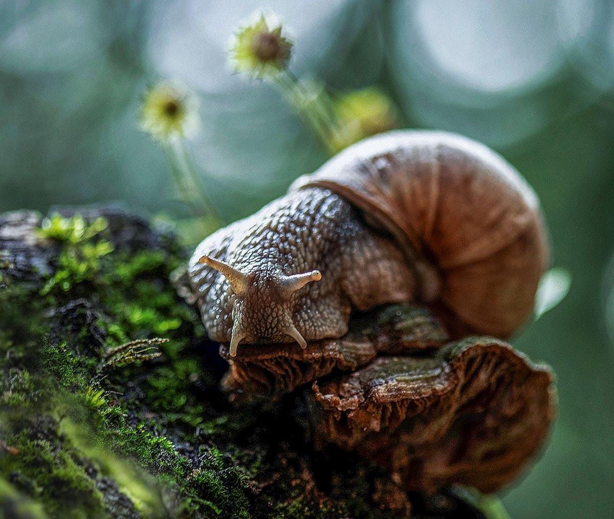 улитка, тихоход,лето,лес, природа, snail, cochlea, mystery, summer, forest, nature, Стукалова Юлия