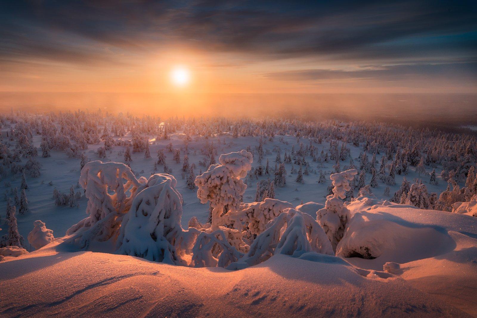 снег, ёлки, деревья, зима, солнце, небо, Cтанислав Малых