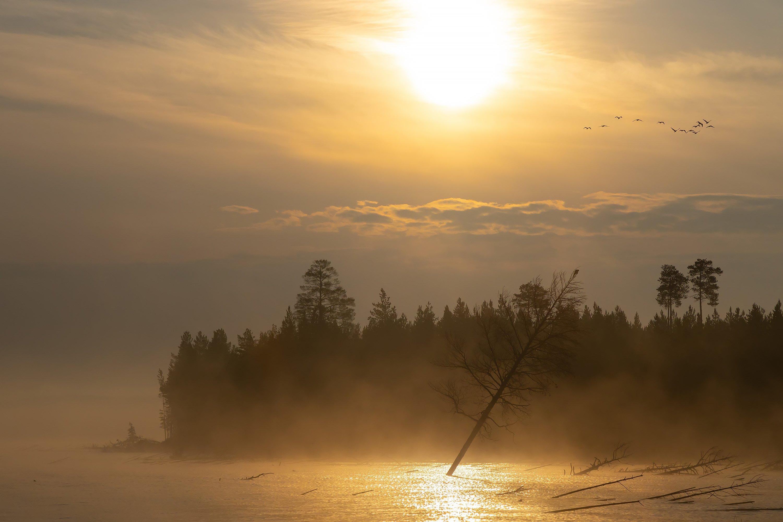 богучаны, утро, вода, озеро, туман, облака, солнце, лес, Ипполитов Александр