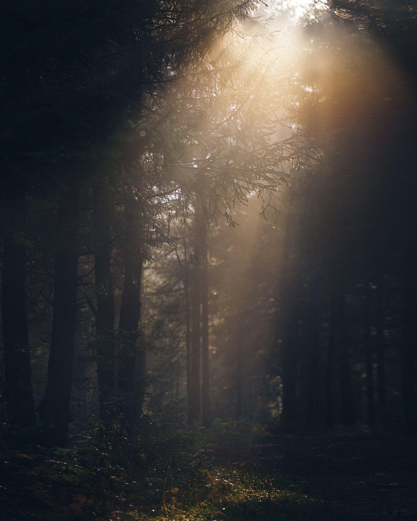 осень, лес, природа, урал, златоуст, туман, Евгений Толкачёв