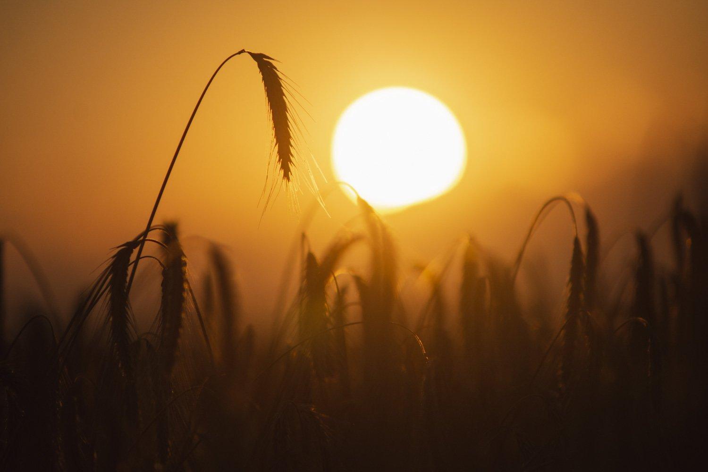 природа, пейзаж, закат, поле, солнце, Piligrim