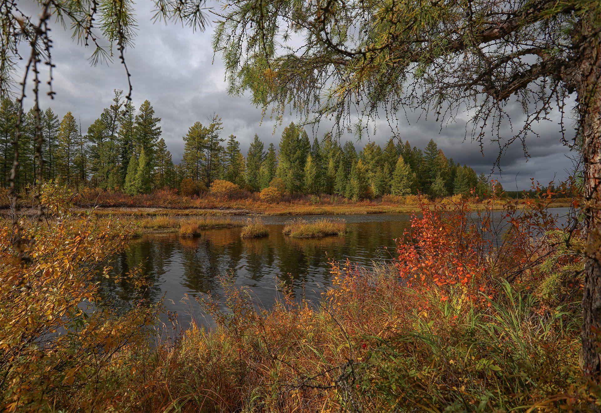 нерюнгри, осень, якутия, река_горбыллах, осень_в_якутии, осенний_пейзаж, Евгения Левина