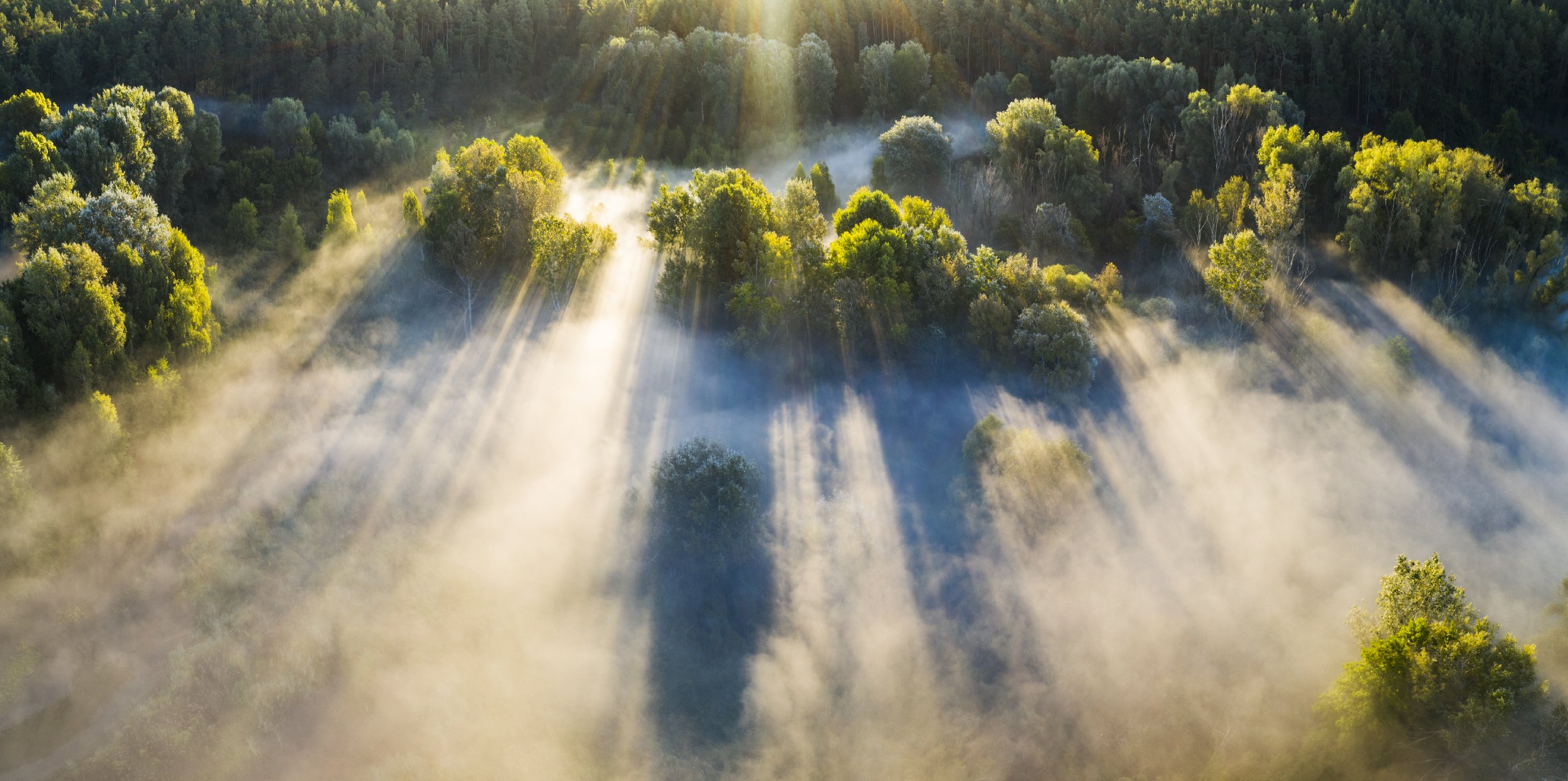 туман, рассвет, лес, Антон Петрусь