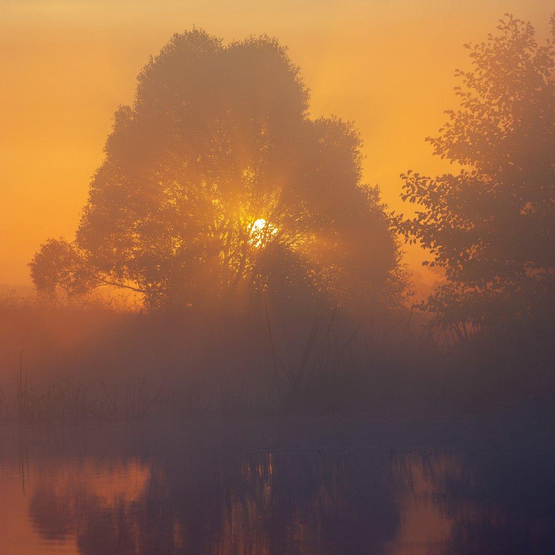 река, волчья, туман, рассвет, солнце, пейзаж, river, fog, dawn, sun, landscape, Виктор Тулбанов
