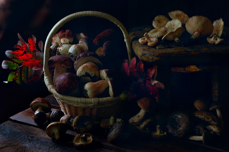 осень, грибы, белый гриб, боровик, подберёзовик, волнушки, чёрный груздь, Алёна Сурнина